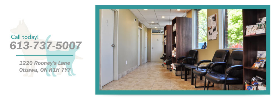 Call today! 613-737-5007, 1220 Rooney's Lane, Ottawa, ON K1H 7Y7 - waiting room