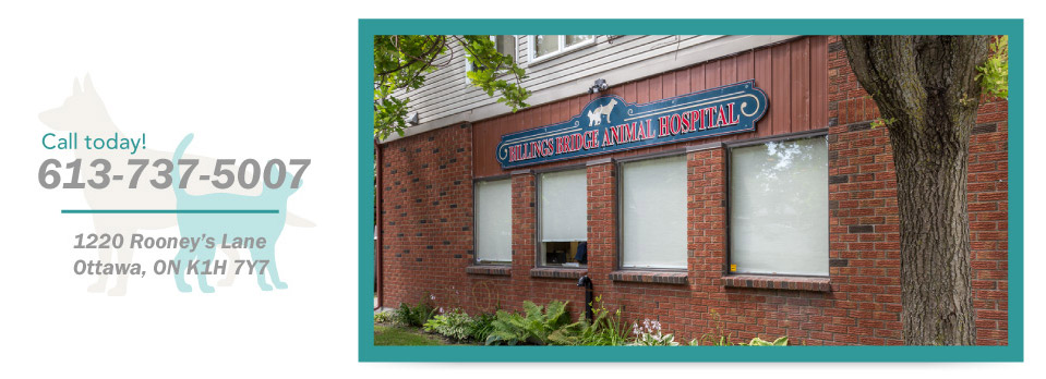 Call today! 613-737-5007, 1220 Rooney's Lane, Ottawa, ON K1H 7Y7 - Billings Bridge Animal Hospital Exterior