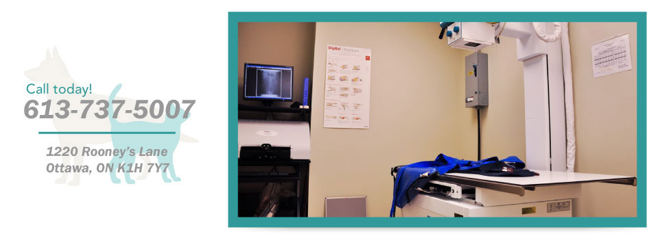 Call today! 613-737-5007, 1220 Rooney's Lane, Ottawa, ON K1H 7Y7 - x-ray table