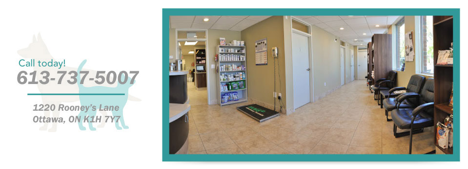 Call today! 613-737-5007, 1220 Rooney's Lane, Ottawa, ON K1H 7Y7 - waiting area