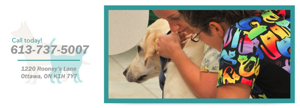 Call today! 613-737-5007, 1220 Rooney's Lane, Ottawa, ON K1H 7Y7 - vets examining dog