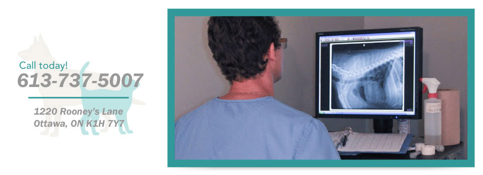 Call today! 613-737-5007, 1220 Rooney's Lane, Ottawa, ON K1H 7Y7 - looking at xrays